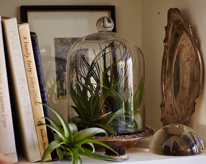 air-plants-tillandsias-glass-cloches-gardenista