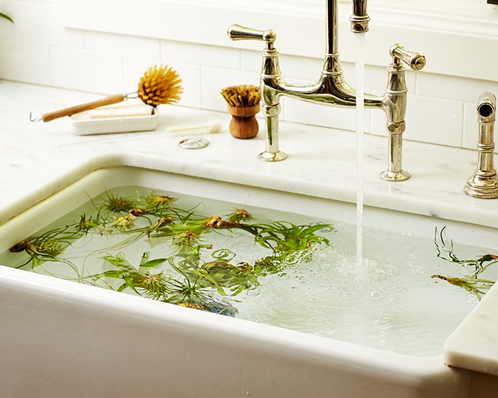 air-plants-tillandsias-sink-faucet-brush-marble-kitchen-gardenista