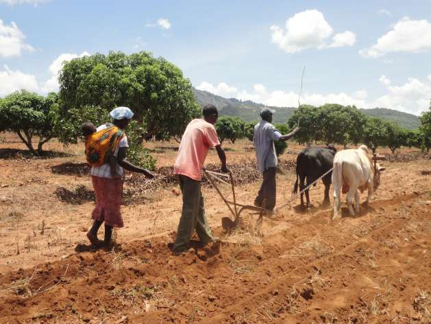 A family in Kenya's semi-arid area till the soil in preparation for the next planting season - Photo: Courtesy of FAO