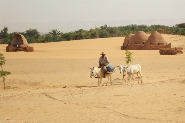 The-water-table-is-falling-in-Egypts-desert-oases-raising-questions-of-sustainability_Cam-McGrath-629x420