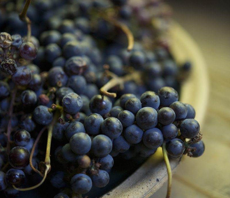 __109__7grapes-laura-silverman-gardenista